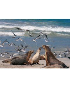 Postkarte Seelöwen und Möven am Strand