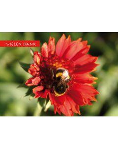 "Postkarte ""vielen Dank"" Biene auf Kokardenblume"