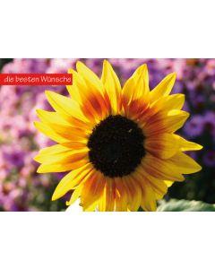 """Postkarte Sonnenblume """"die besten Wünsche"""""""