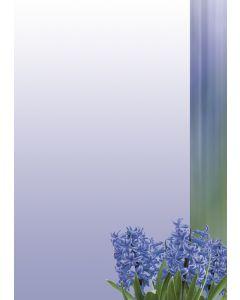 Briefpapier blaue Hyazinthen
