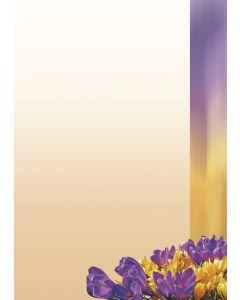 Briefpapier gelb und lila Krokusse