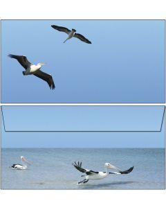 Briefumschläge Pelikane