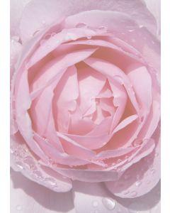 Briefpapier rosa Rose mit Regentropfen